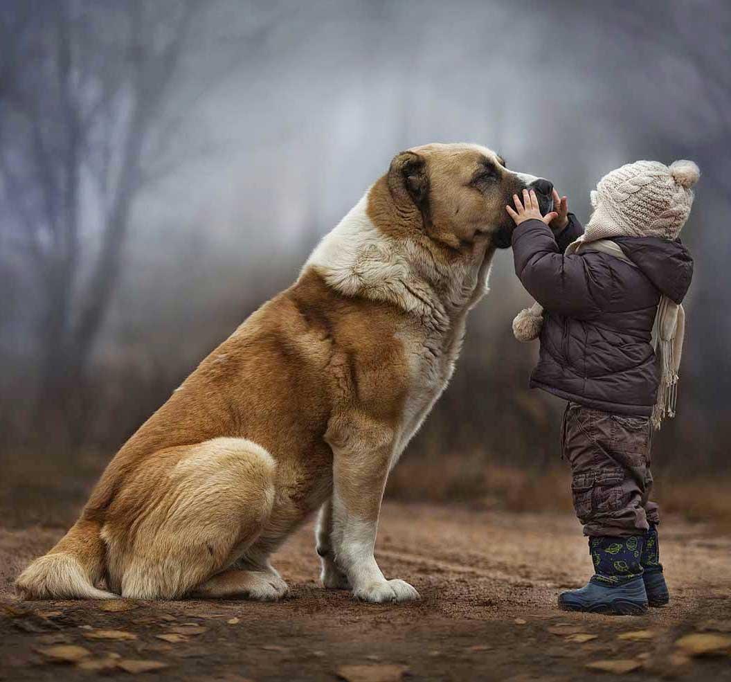Big Dog Photoshop